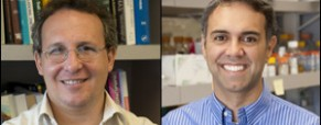 Cohen, Mitra named Goldfarb professors
